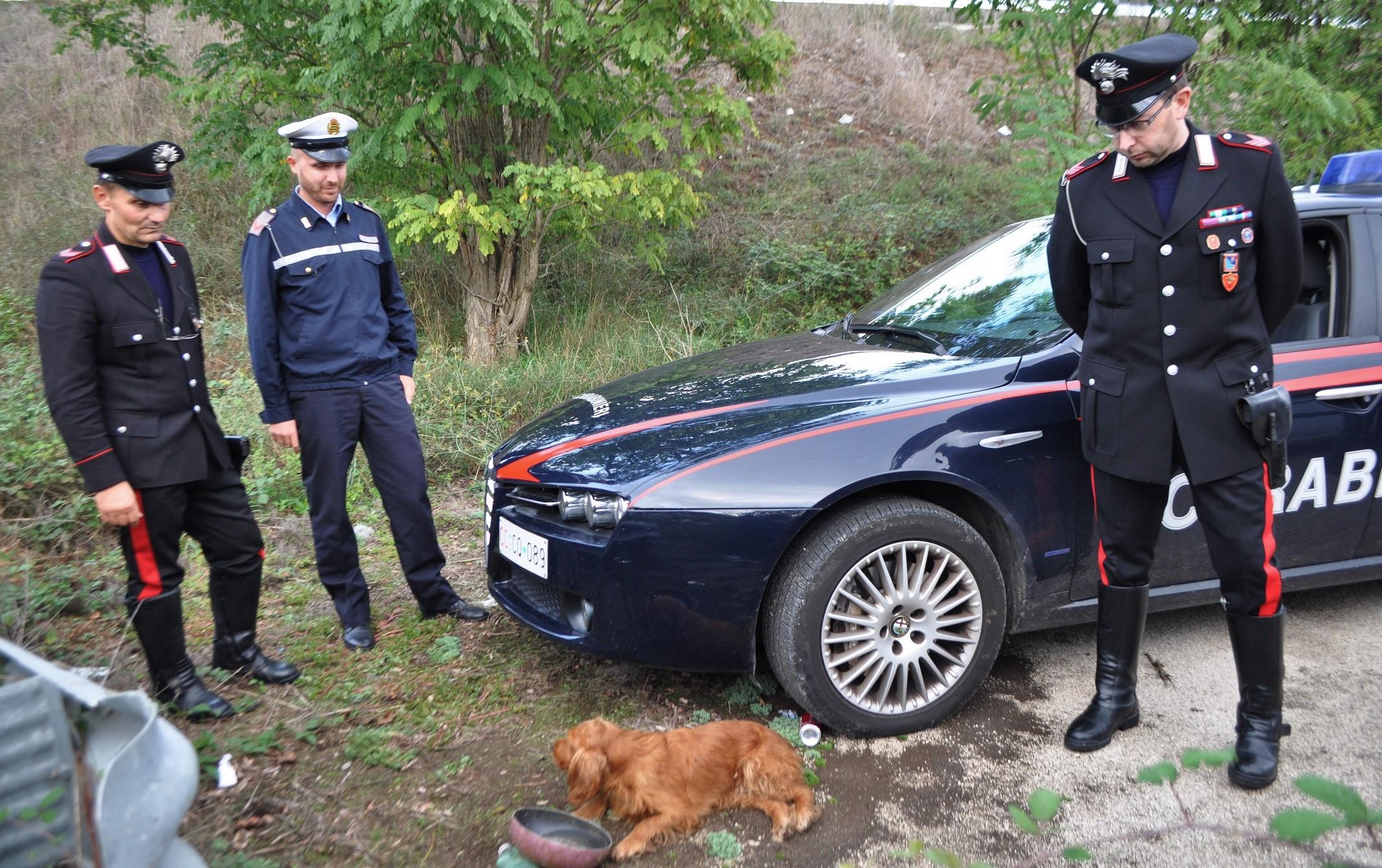 Carabinieri Venafro cocker 3