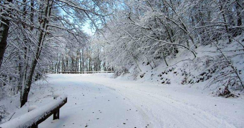 Danni nevicata aziende agricole domande da presentare for Subito it molise attrezzature agricole