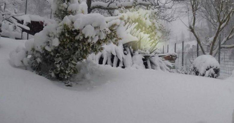 Neve danni in agricoltura invito alla presentazione for Subito it molise attrezzature agricole