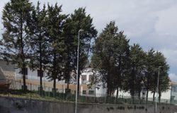 Pietracatella alberi