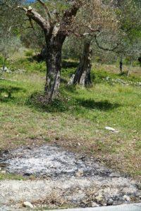 olivi bruciati venafro 2