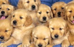 foto cani