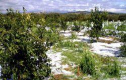grandine-campi-coltivazioni-danni
