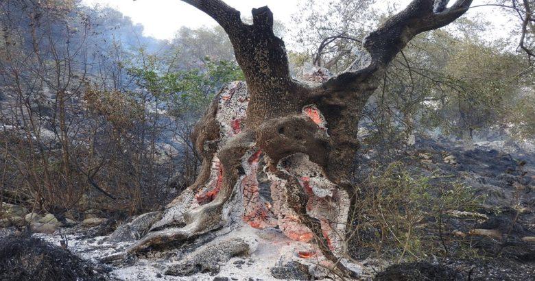 incendio Venafro