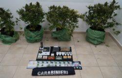 piantagione marijuana casa pozzilli