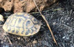 tartarughe carbonizzate