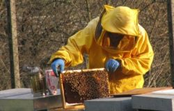 apicoltura molise