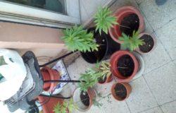 colticazione marijuana terrazzo casa