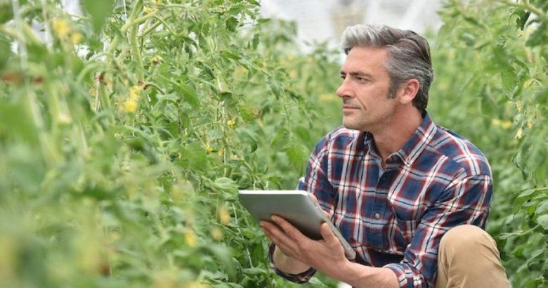 consulenza aziendale agricoltura
