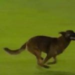 CURIOSITA' - Cane attraversa il campo nel derby il tecnico Di Meo lo afferra per il collo scatenando la rabbia rossoblù