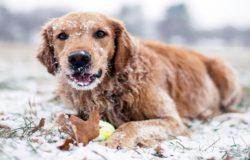 freddo cane