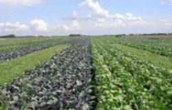 cambiamenti climatici e produzione agraria