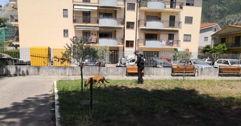 VENAFRO – Cani avvelenati, trovati i bocconi