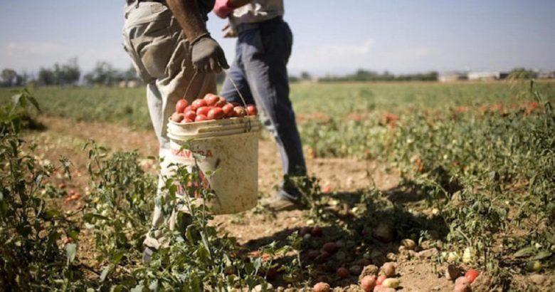caporalato_immigrati_agricoltura