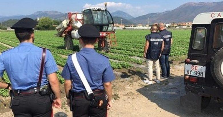 carabinieri azienda agricola