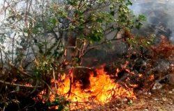 fuoco sterpaglie
