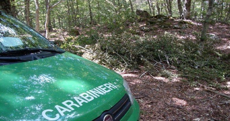 CC Forestali
