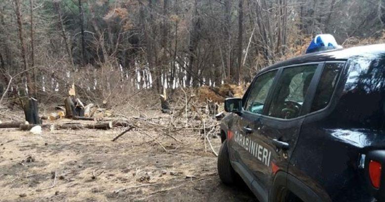 VENAFRO - Furto di legna, sette persone denunciate