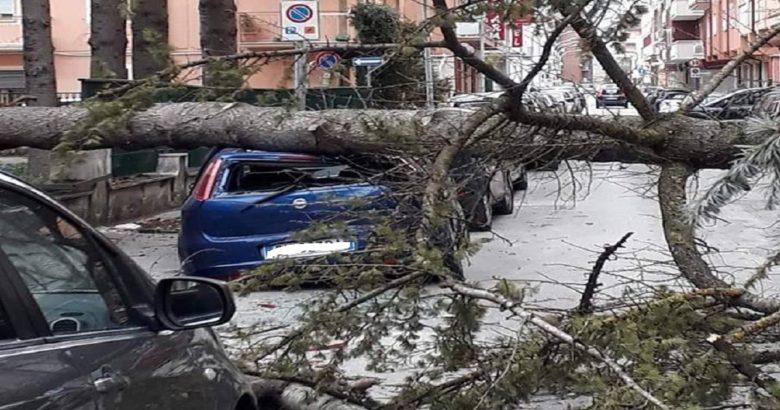 Isernia Cade albero vicino scuola, auto danneggiate