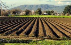 bandi agricoltura