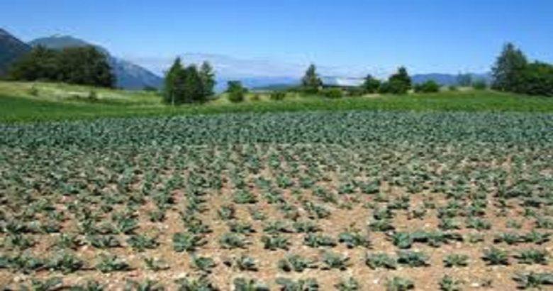 FAUNA SELVATICA, Campobasso, Molise, Danni nelle campagne, pochi i risarcimenti, CIA, agricoltori italiani del molise,