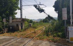 MALTEMPO - Treni Venafro-Roccaravindola, albero caduto: circolazione ferroviaria in tilt