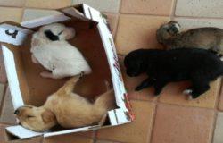 cuccioli abbandonati cassonetto ceppagna