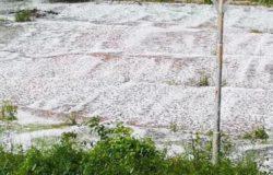 pioggia grandine agricoltura