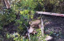 Tragedia nelle campagne, stava tagliando degli alberi muore 67enne