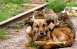 randagismo cani e gatti