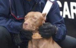 Deferito il proprietario di un cane per maltrattamenti