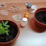 """CRONACA - """"Kobret"""", dosi di """"marijuana"""" e due piantine di """"cannabis"""": padre e figlio nei guai"""