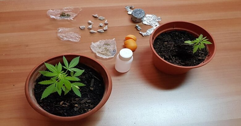 """CRONACA - Kobret"""", dosi di """"marijuana"""" e due piantine di """"cannabis"""" padre e figlio nei guai"""