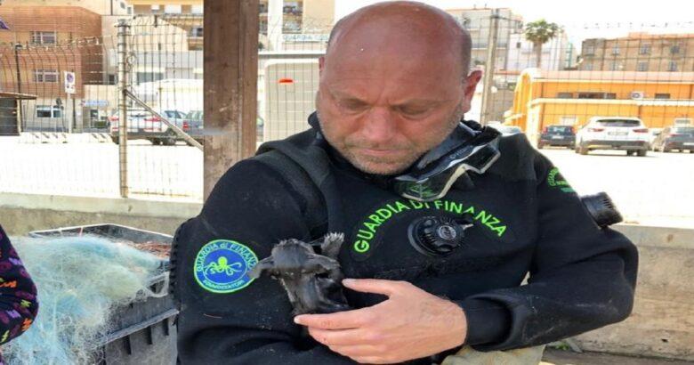 Gattino salvato, porto di Termoli, Fiamme Gialle