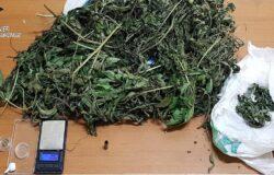 Cocaina, marijuana, denunciato, spaccio di droga