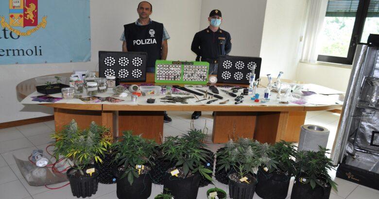 Operazione Drug Indoor, arrestato 38enne produzione coltivazione sostanze stupefacenti