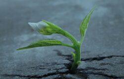 """TUTELA AMBIENTALE - """"Più Verde… Più Vita"""", seconda rivista scientifica a cura della Smaltimenti Sud"""