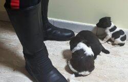 abbandonati, cuccioli, salvati, Carabinieri