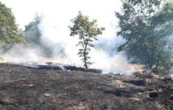 Incendio boschivo, individuato, denunciato