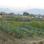 VENAFRO - Derubato nel suo orto: paura per un anziano, ladro in fuga