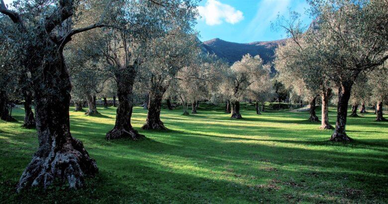 parco dell'olivo di venafro