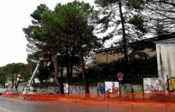CAMPOBASSO, Restyling urbano, abbattimento, alberi, pericolosi, rifacimento dei marciapiedi