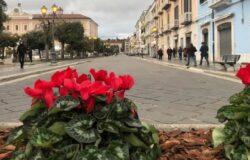 Campobasso, fiorerie in fiore