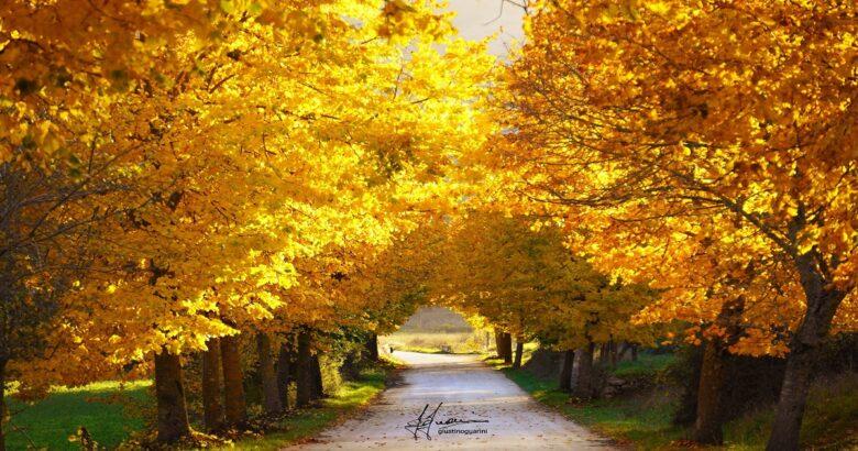 colori autunnali, natura, Conca Casale, suggestivo viale, tigli, mille colori