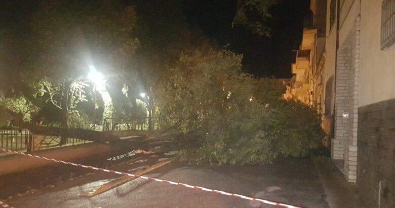 VENAFRO, Villa Maria, albero, abbattuto, vento