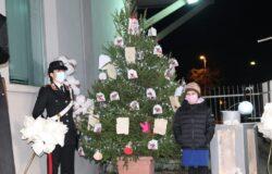 larino, albero della cultura della legalità, carabinieri, studenti,