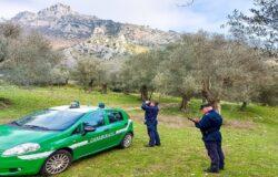 VENAFRO, Pascolo abusivo, Parco dell'olivo, denunciati, allevatori