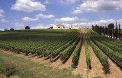 Agricoltura, in arrivo aiuti per agriturismi e fattorie didattiche