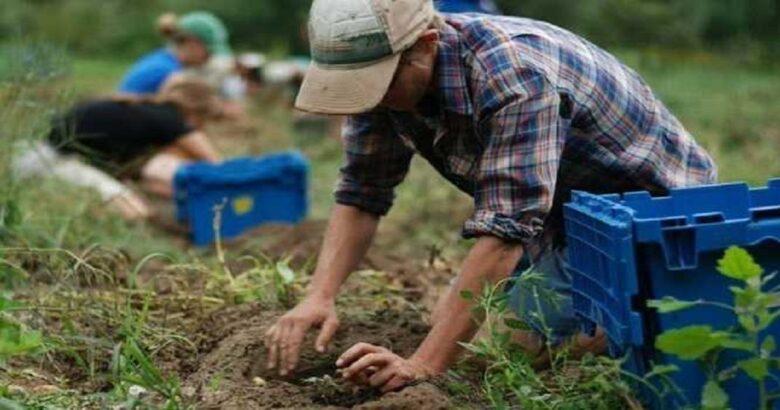 COVID, Lavoratori agricoli, stagionali, dimenticati, governo, Cgil, Cisl, Uil