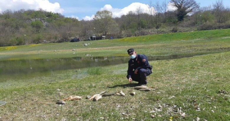 pesci morti, lago, indagini in corso
